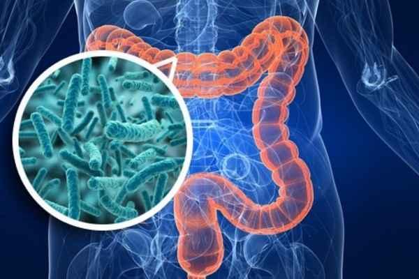 Saúde intestinal e nutrição: um importante pilar para o seu atendimento