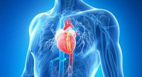 Consumo de gorduras e a saúde  cardiovascular