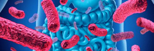 A microbiota intestinal, a dieta e a saúde humana